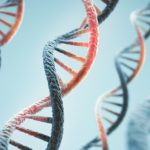 Mitochondrial DNA Can also be Transmitted from Father to Child